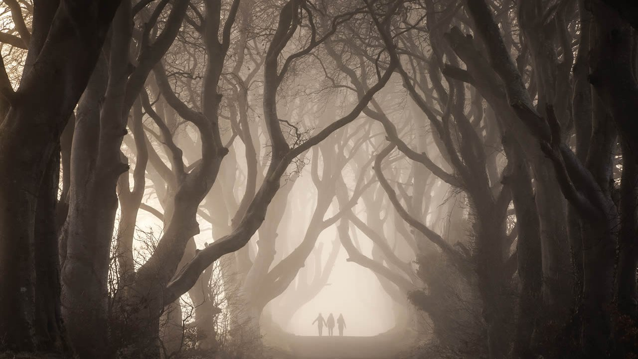 Dark Hedges Experience Game of Thrones Tour