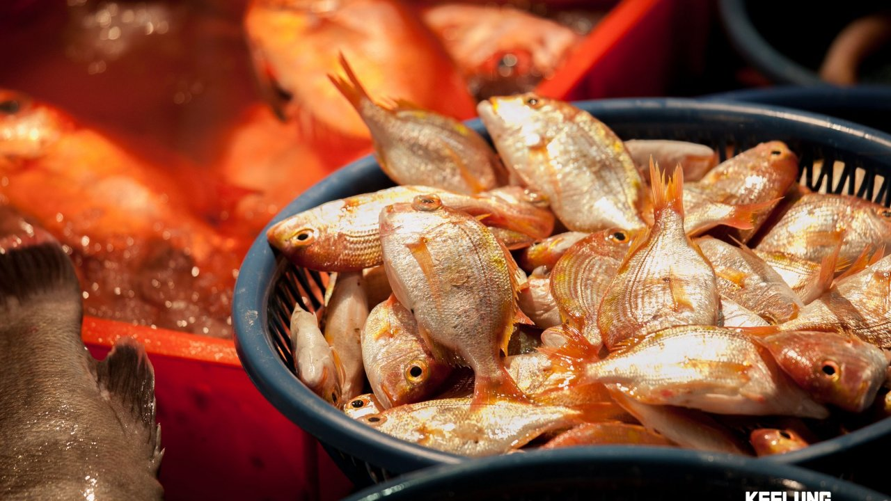 Just one of the many types of fish at Kanziding!